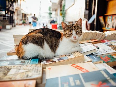 Istanbul - thủ đô của mèo hoang