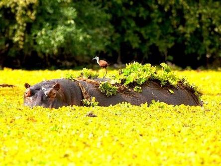 Thế giới hoang dã của Zimbabwe