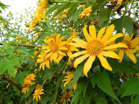 Miền Tây Quảng Trị - hành trình tìm đến hoa Dã quỳ