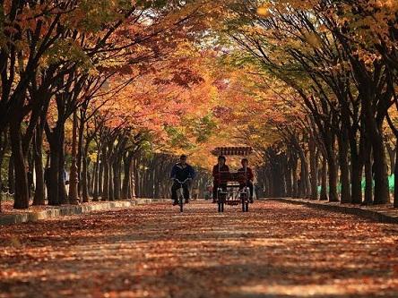 Visa du lịch Hàn Quốc giá rẻ