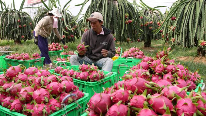 Вьетнам: Экспорт фруктов, овощей в январе составил 321 млн. Долларов США